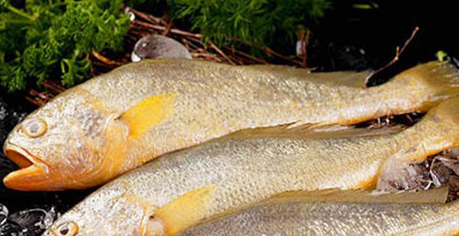 做鱼吃的技巧 几招教你怎么做好鱼