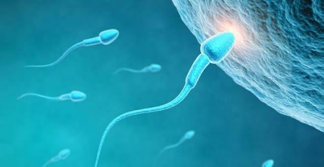 精子遇上卵子的瞬间,太震撼了!